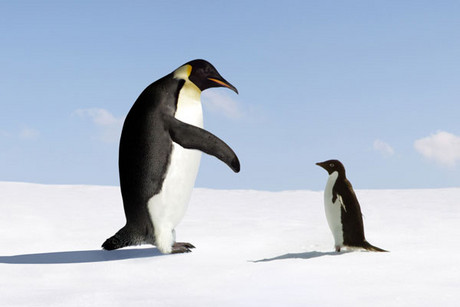 The giant penguin lived 34 million years ago (file pic)